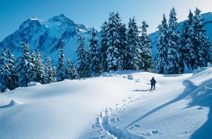Mount Baker Ski Resort